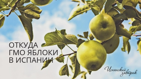 Откуда ГМО яблоки в Испании